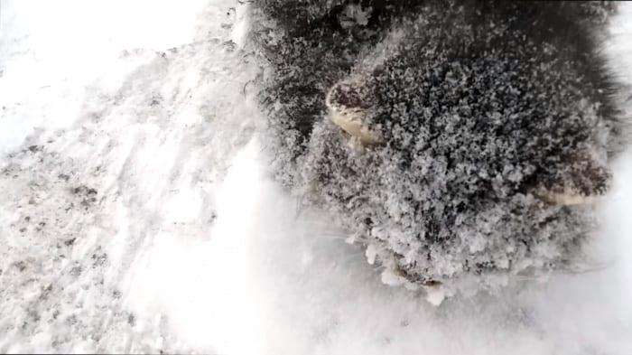 Парень не смог пройти мимо комка шерсти под снегом