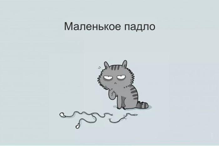 12 типов котов - шуточная классификация в картинках