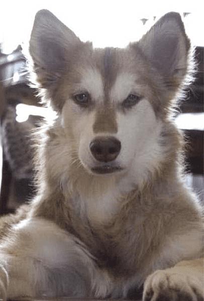 Тощий пес уже ни на что не надеялся, а сейчас счастливо живет на другом конце света