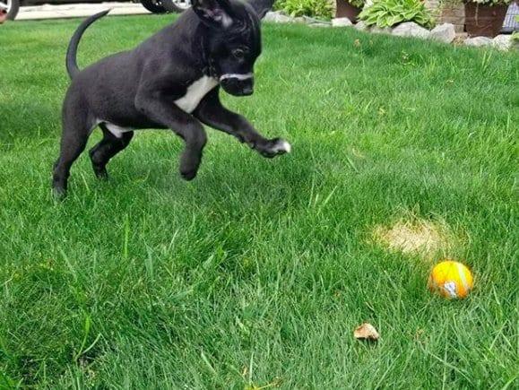 Двухмесячного щенка нашли с пластиковым хомутом на мордочке