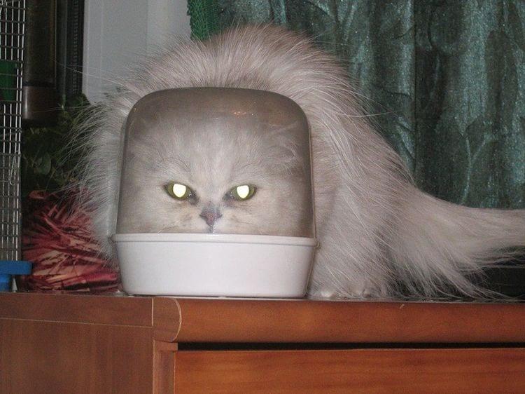 24 доказательства, что коты - пришельцы из космоса