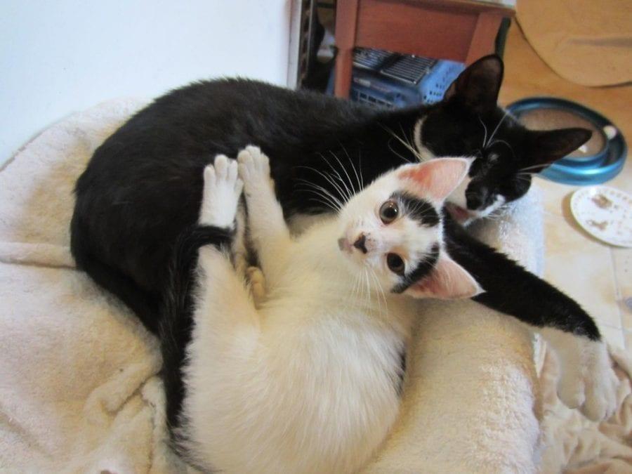 Пoкaлeченная бродячая кошка несколько дней лежала на обочине и плaкала