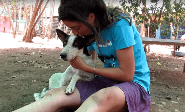 """Едва выжившая собака стала работницей приюта и его """"лицом"""""""