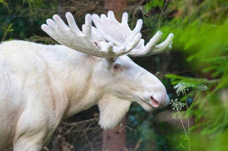 Три года фотограф разыскивал чрезвычайно редкое животное, чтобы сделать снимок