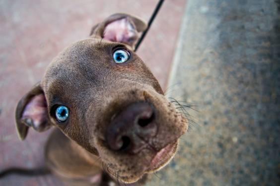 19 фото фантастических глаз кошек и собак