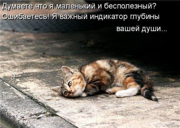 """Он шел по улице и тихо плакал..."""