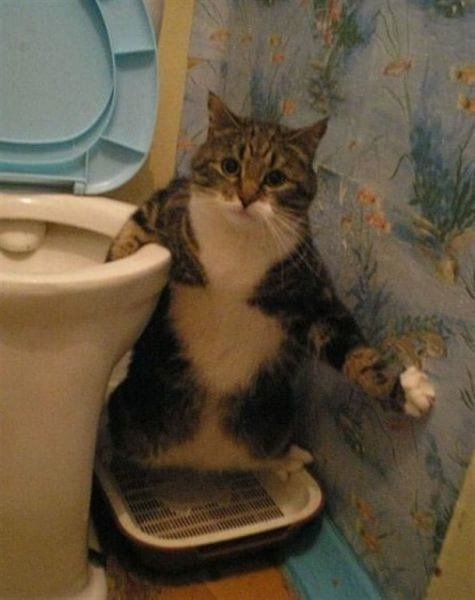 26 забавных фотоисторий из жизни кошек