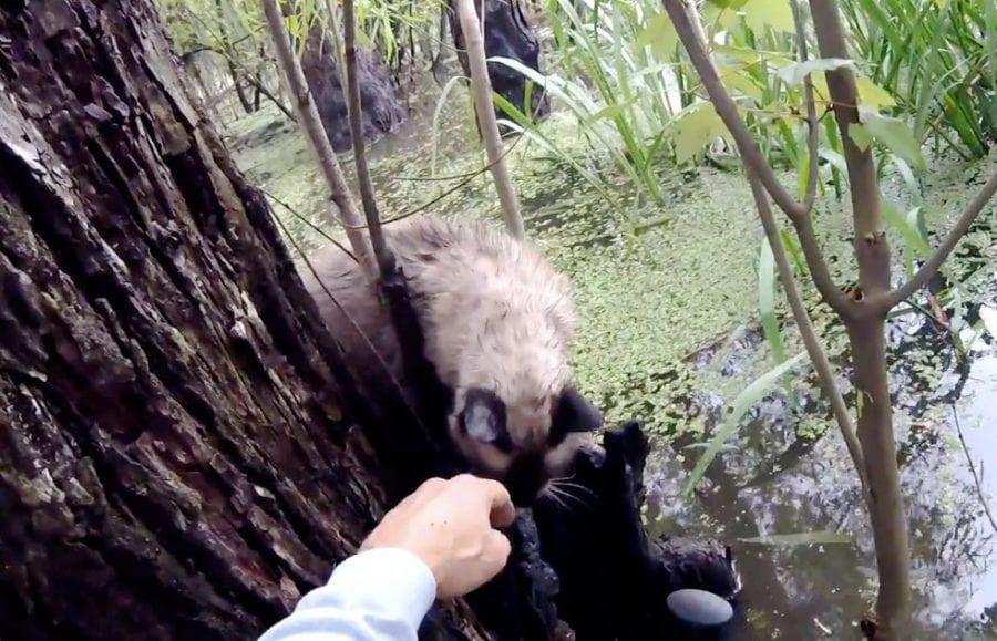 Человек полез в страшное болото, чтобы спасти кота