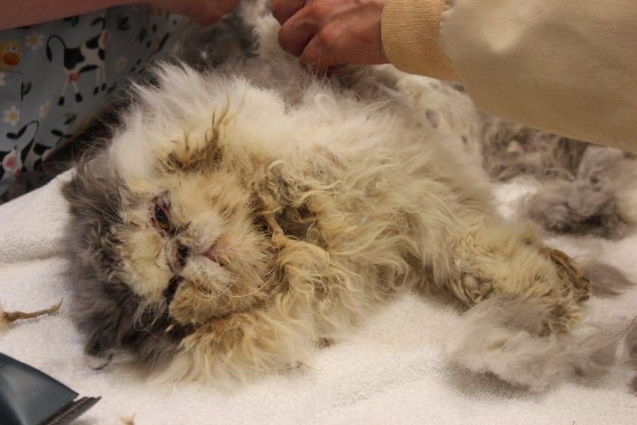 Спасение кота Гобо, который так зарос шерстью, что почти не видел