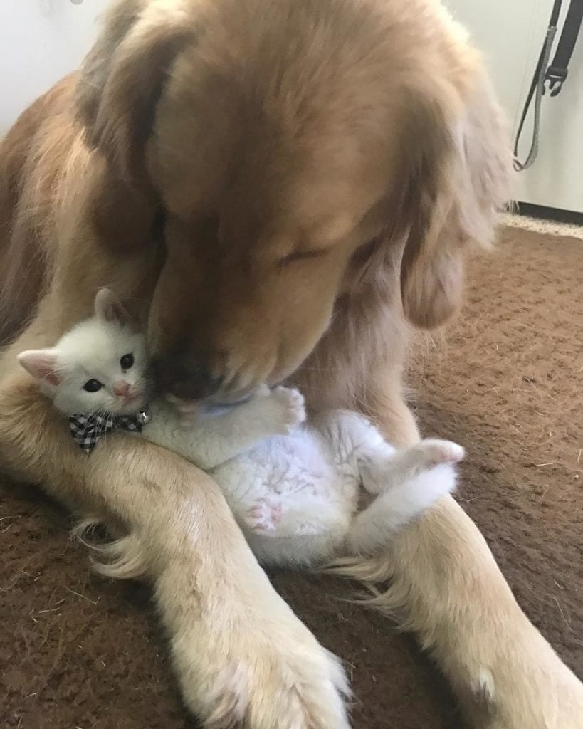 Котенок-отказник с дефектом лап нашел семью и лучшего друга