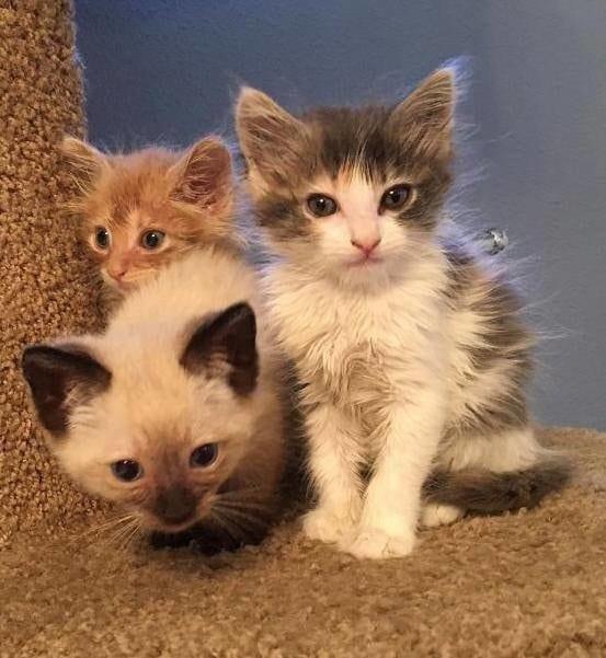Мужчина нашел в поле троих выброшенных котят