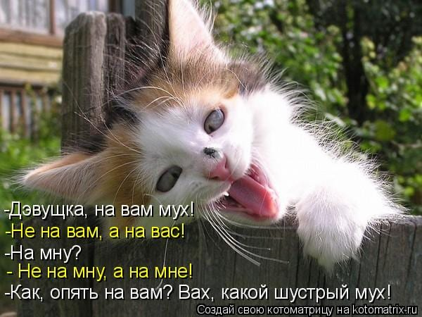 25 картинок о непростых взаимоотношениях котов с мухами