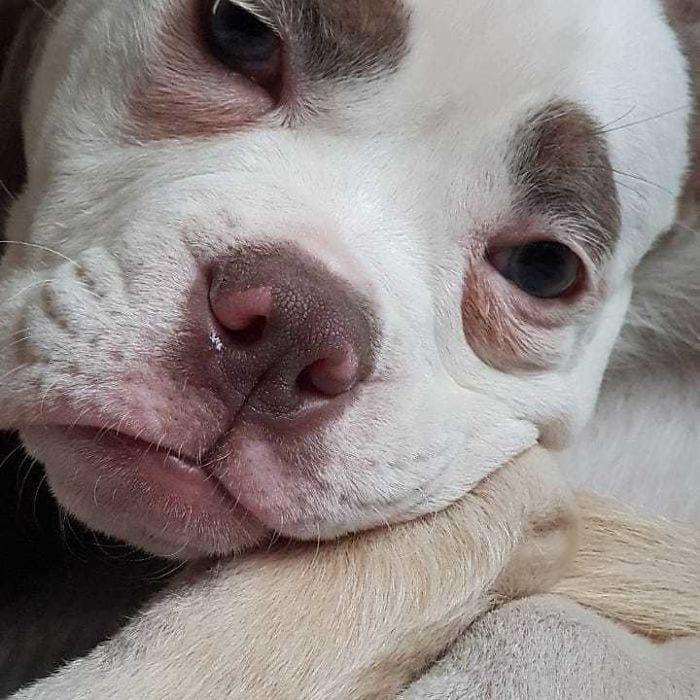 Знакомьтесь, Мадам Брови - самая печальная собака Интернета