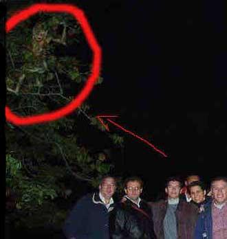 Ученых Колумбии озадачило неизвестное существо