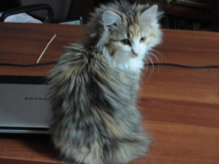 Семья спасла котенка, но не может определить пол и дать имя. Поможем?