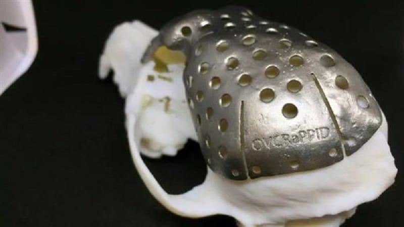 Собаке с опухолью заменили 70% черепа с помощью 3D-технологий