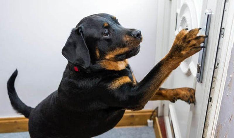 Собака спасла хозяину жизнь, открыв дверь врачам