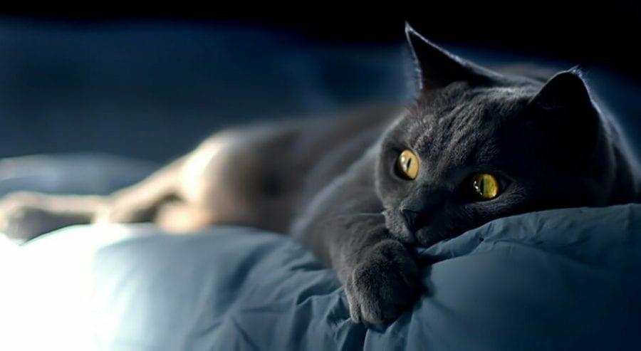 23 фото мегатемпераментных животных