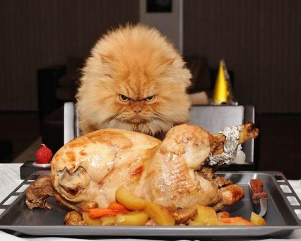 Чем нельзя кормить котят: правила здорового питания