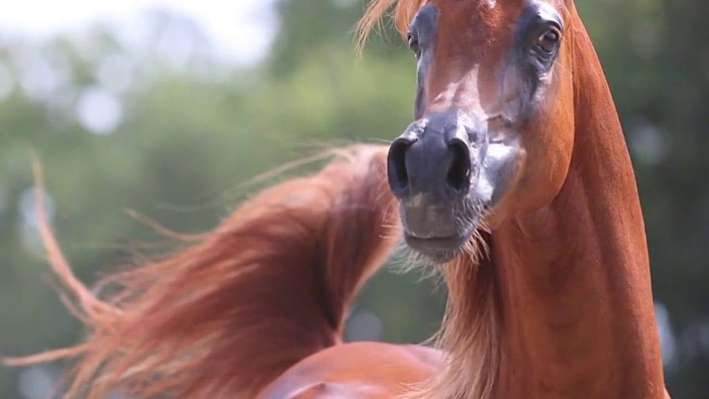 Новая сенсационная порода лошадей с мордой мультяшного героя