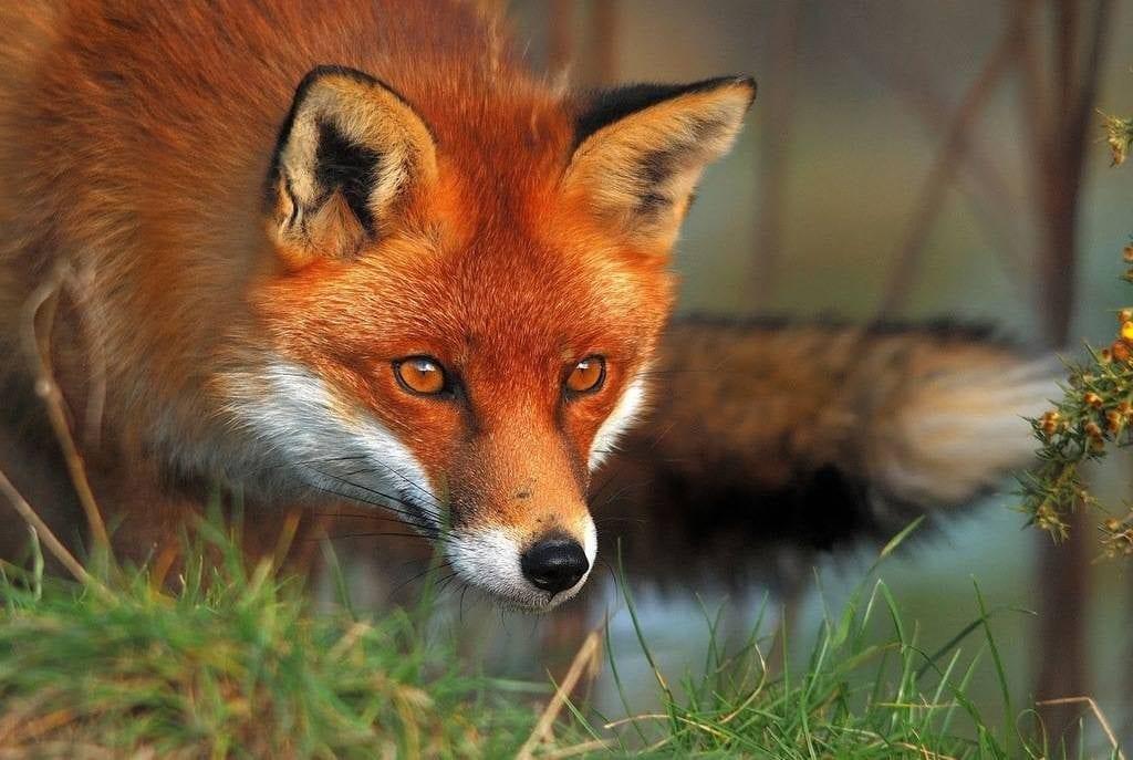 Если эти животные появляются в вашей жизни часто, значит с вами связываются «сверху»