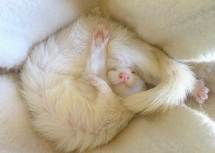 27 фото животных, которые очень-очень устали