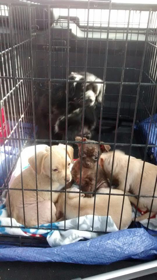 """Водитель увидел, как собака царапает закрытую коробку на обочине и """"плачет"""""""