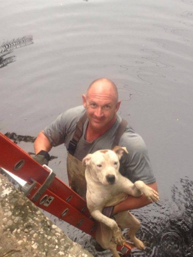 Собака, упавшая в реку, смогла дождаться спасателей благодаря морскому животному