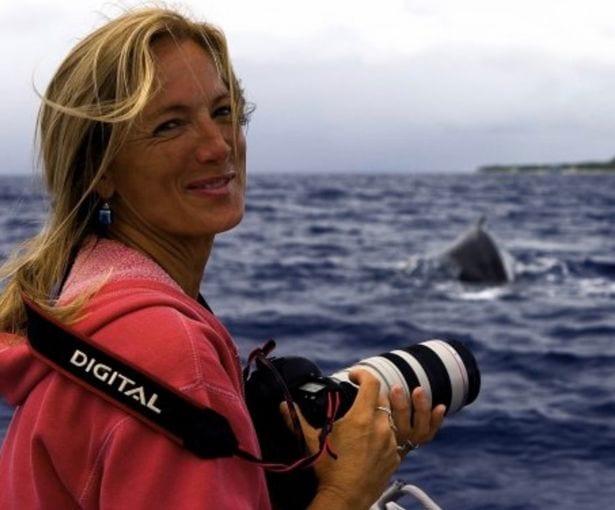 ВИДЕО: Горбатый кит спас биологов от тигровой акулы