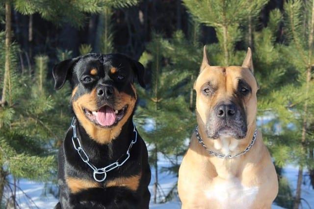 17 фото обожаемых собак