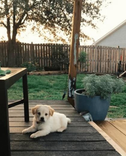 История крепкой дружбы между псом и... кирпичом