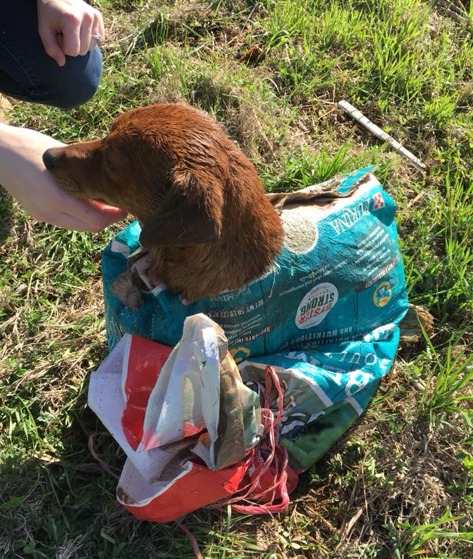 Посреди безлюдного поля пара нашла собаку... в закрытом мешке... со связанными лапами... и пулeй в плече