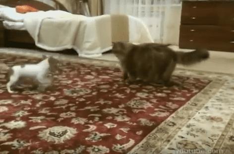 ВИДЕО: Толстый кот и Моська - старая басня на новый лад