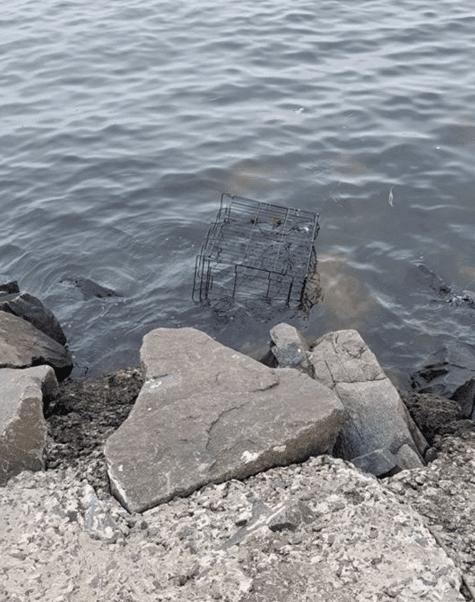 На прогулке с собакой женщина заметила в океане клетку, в которой кто-то был