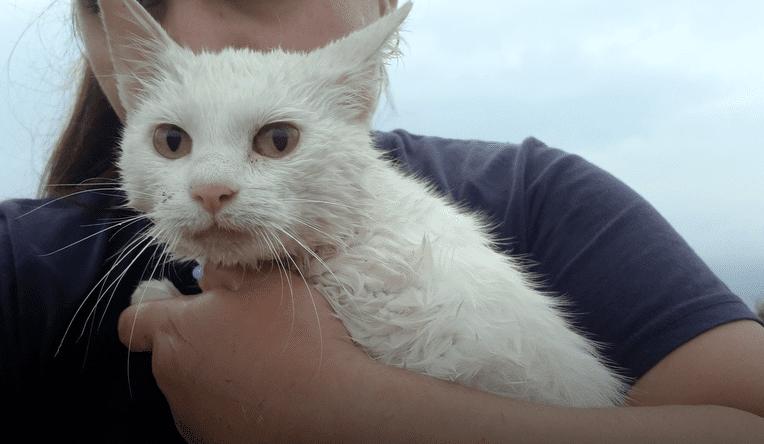 ВИДЕО: Беременную кошку пытались утoпить, но она спаслась