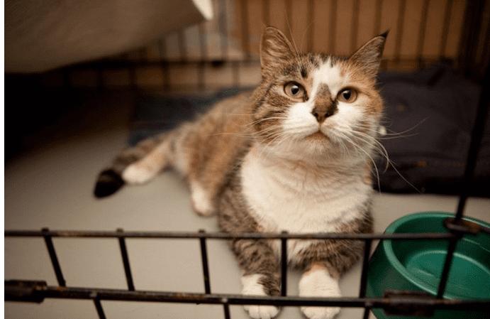 Кошка, ночевавшая на улице в пригороде, теперь живет в квартире в Москве