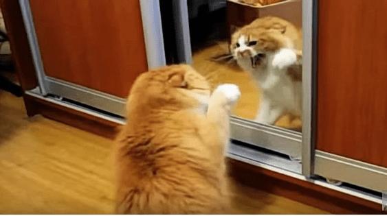 ВИДЕО: Барсик воюет с бесстыжим рыжим котярой из Зазеркалья