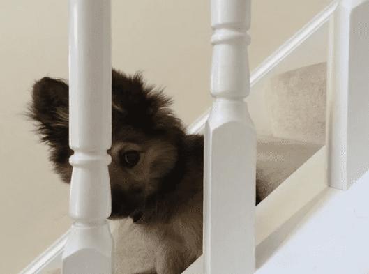 17 фото ну очень скромных и стеснительных животных