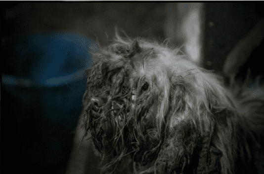 Владелец мясокомбината нашел в стойле странное существо