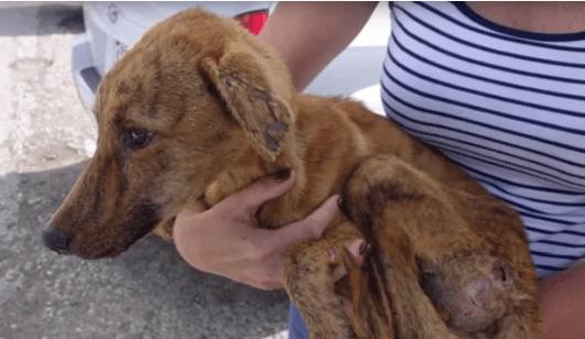 Люди спасли собаку, которая на много дней застряла в куче мусора