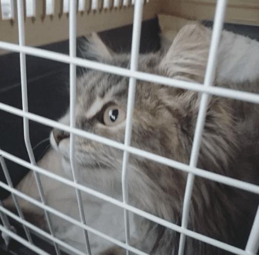 Бездомная кошка потеряла лапку и уже была обрeчена