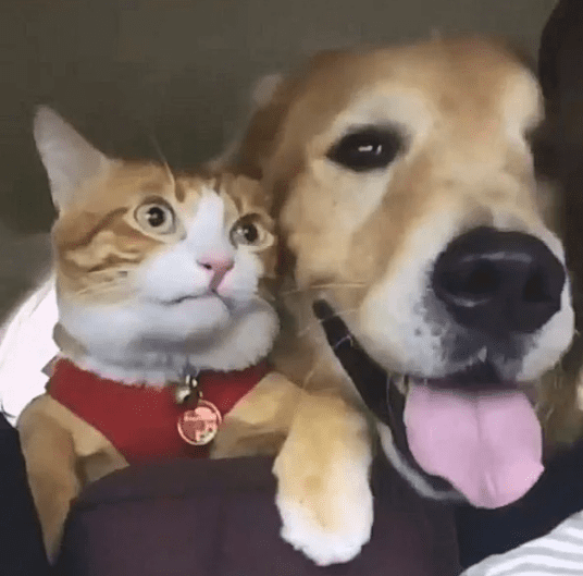 Рыжий пес спас рыжего котенка, и теперь они братья навек