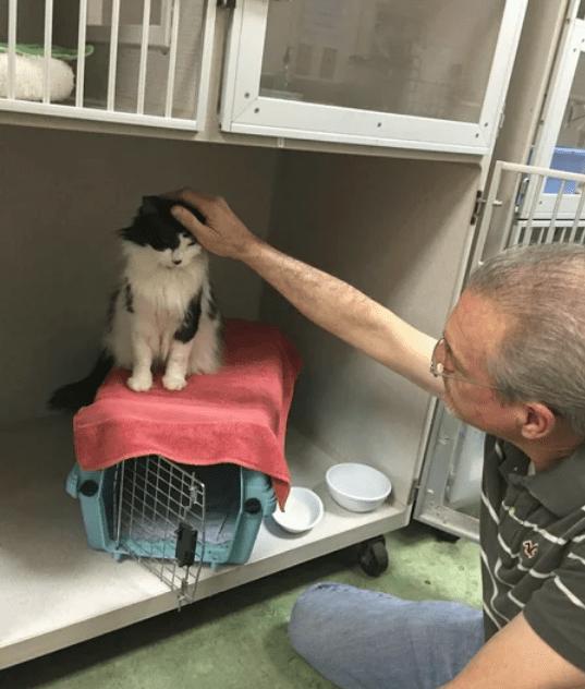 Котика полтора года не выпускали из переноски