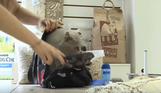 Хозяева бросили кота в аэропорту в закрытой переноске и улетели