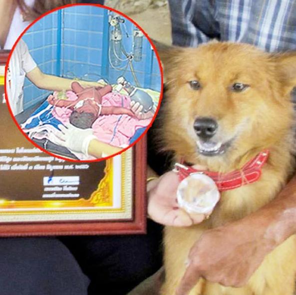 Собака принесла домой найденный на свалке пакет и этим спасла человека