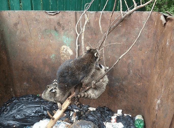 Доброе дело можно сделать, даже выбрасывая мусор