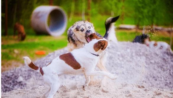 Парк развлечений для собак