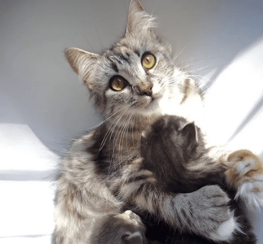 Подбирая с улицы бездомную кошку, женщина не знала, что спасает 4 души