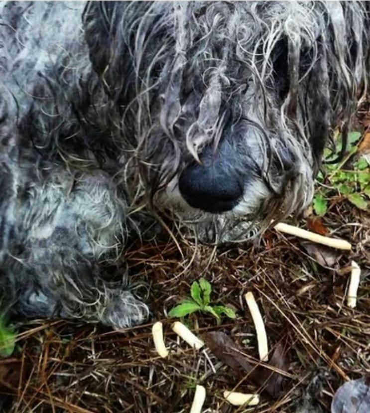 У ручья в парке лежала собака, привязанная к пню