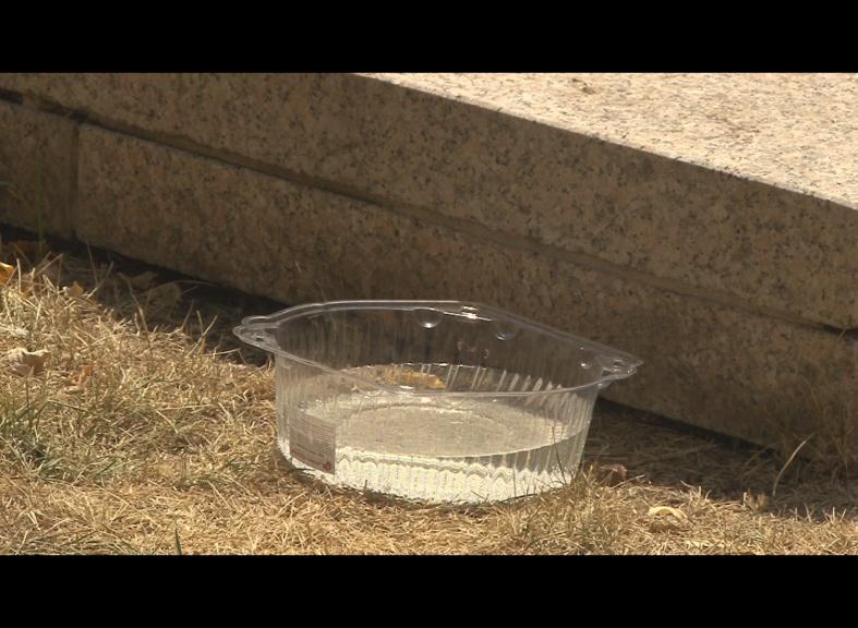 Помогите животным в жару: просто дайте им воды!
